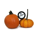 Pumpkin Face and Body Scrub - 6oz
